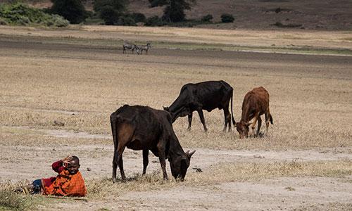 Ngorongoro-500