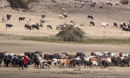 Ngorongoro_Maasai